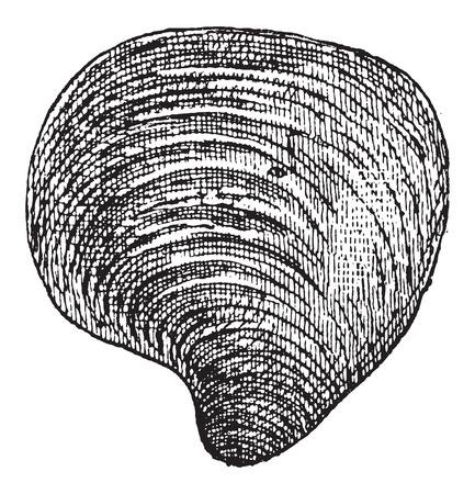 淡水産二枚貝ビンテージ図を刻まれています。辞書の言葉や物事 - Larive 氏 - 1895