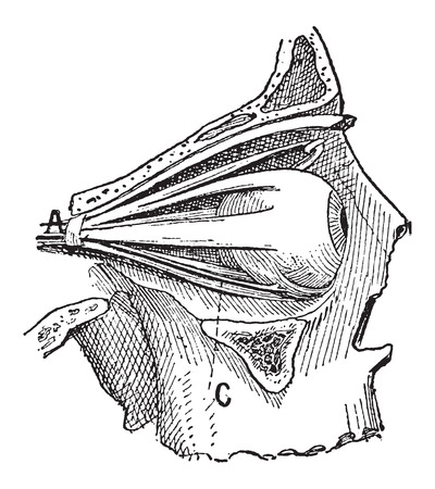 eye socket: Nerves of the Human Eye, showing oculomotor nerve, abducens nerve, and trochlear nerve, vintage engraved illustration. Dictionary of Words and Things - Larive and Fleury - 1895
