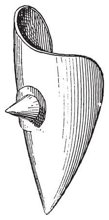 pointy: Shield boss or Umbo, vintage engraved illustration. Dictionary of words and things - Larive and Fleury - 1895.