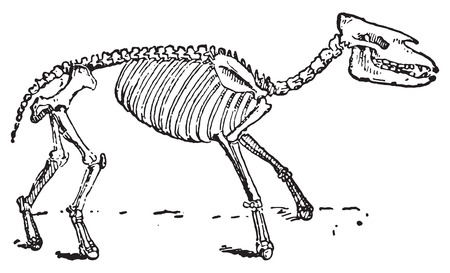 Palaeotherium, vintage engraved illustration. Dictionary of words and things - Larive and Fleury - 1895.