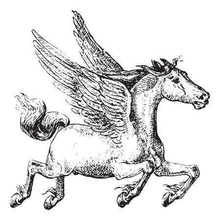 old horse: Pegasus, vintage engraved illustration. Dictionary of words and things - Larive and Fleury - 1895. Illustration
