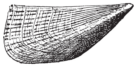 Pinna, vintage engraved illustration. Dictionary of words and things - Larive and Fleury - 1895.