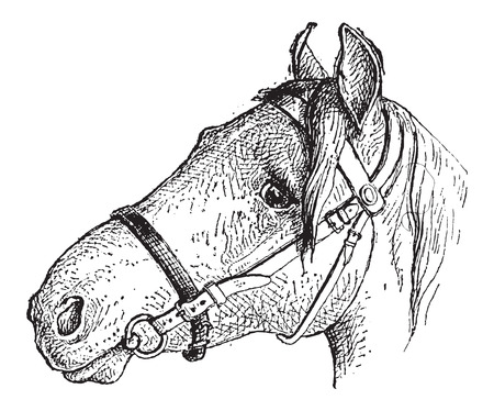 encircle: Noseband (shaded), vintage engraved illustration. Dictionary of Words and Things - Larive and Fleury - 1895 Illustration