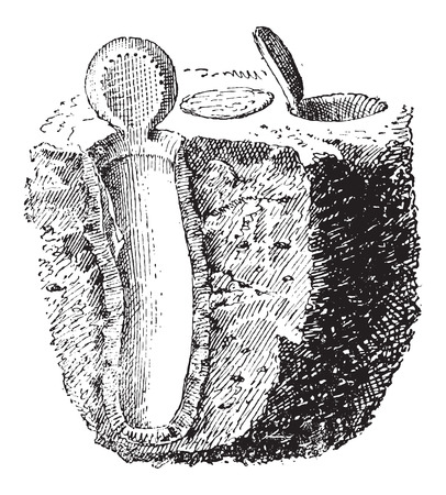 Nest, of Purseweb spider or Atypus affinis, vintage engraved illustration. Dictionary of Words and Things - Larive and Fleury - 1895