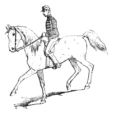 the passage: The Passage (riding horse), vintage engraved illustration. Dictionary of words and things - Larive and Fleury - 1895.