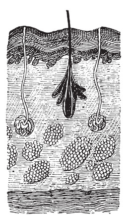 representations: Mans Skin, vintage engraved illustration. Dictionary of words and things - Larive and Fleury - 1895. Illustration
