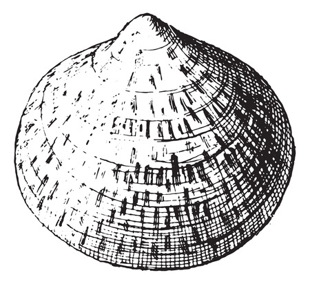 Scallop, vintage engraved illustration. Dictionary of words and things - Larive and Fleury - 1895. Çizim
