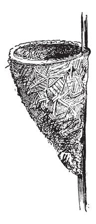 小枝、草、葉から成っている円錐形を示すミソサザイまたはミソサザイ属 sp の巣は木の枝、ヴィンテージの刻まれた図を添付しました。辞書の言葉