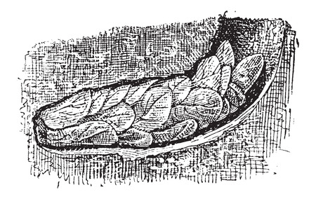 burrow: Nest of the Leafcutter Bee or Megachile sp., made up of chewed petals and leaves, inside a burrow on the ground, vintage engraved illustration. Dictionary of Words and Things - Larive and Fleury - 1895