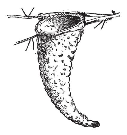 偉大なトキ ヒタキまたは Myiarchus ピエトロ ・ クリニート、ヴィンテージの刻まれた図を分岐した木の枝に接続されているの巣。辞書の言葉や物事 -