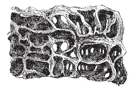 Ant またはアリ、断面、表示卵、ヴィンテージの巣の図は刻まれています。辞書の言葉や物事 - Larive 氏 - 1895