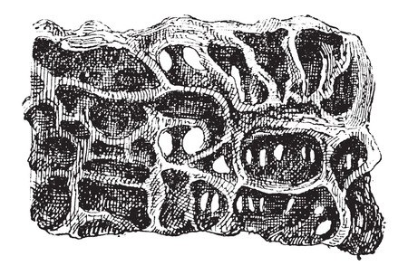 formicidae: Nest of Ant or Formicidae, cross-section, showing eggs, vintage engraved illustration. Dictionary of Words and Things - Larive and Fleury - 1895