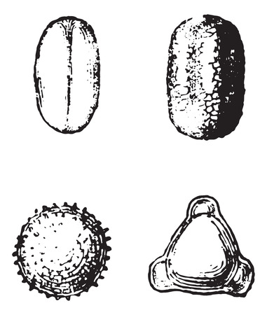 Pollen, vintage engraved illustration. Dictionary of words and things - Larive and Fleury - 1895.