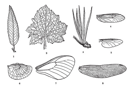 venation: Leaf Vein in Plants (1,2,3) and Wing Vein in Insects (4,5,6,7,8), vintage engraved illustration. Dictionary of Words and Things - Larive and Fleury - 1895