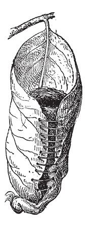 ビンテージ刻まれた図の中の草の植物繊維で縫製、広い葉から成っている Tailorbird または Orthotomus sp の巣。辞書の言葉や物事 - Larive 氏 - 1895  イラスト・ベクター素材