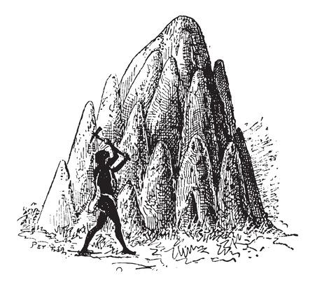 Montículo o termiteros, de termitas o Termitoidae, que se muestra son grandes montículos, cosecha ilustración grabada. Diccionario de palabras y las cosas - Larive y Fleury - 1895 Foto de archivo - 35364924