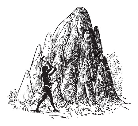 mounds: Mound or Termitaria, of Termite or Termitoidae, shown are large mounds, vintage engraved illustration. Dictionary of Words and Things - Larive and Fleury - 1895