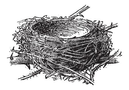 nido de pajaros: Nido del atricapilla capirotada o Sylvia, formada por ramas, hierba, hojas, cosecha ilustraci�n grabada. Diccionario de palabras y las cosas - Larive y Fleury - 1895 Vectores