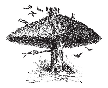 コミュニティの社会の織工または Philetairus socius 巣の鳥、ヴィンテージの刻まれた図の 100 ペア家ができます。辞書の言葉や物事 - Larive 氏 - 1895  イラスト・ベクター素材