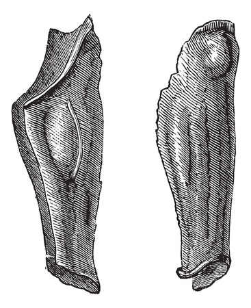 greaves: Old engraved illustration of the armor leg of tin or flexible greaves. Industrial encyclopedia E.-O. Lami ? 1875.