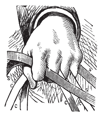 reins: How to hold the reins of horse in double riding, vintage engraving. Old engraved illustration of a diagram of how to hold the reins of horse in double riding with human hand. Illustration