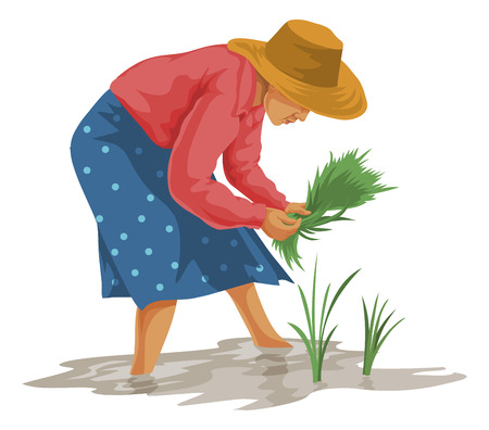 Vector illustration of woman plucking vegetables in farm.