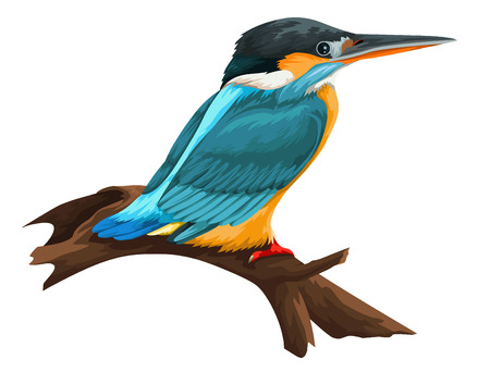 perching: Vector illustration of bird perching on tree branch against white background.
