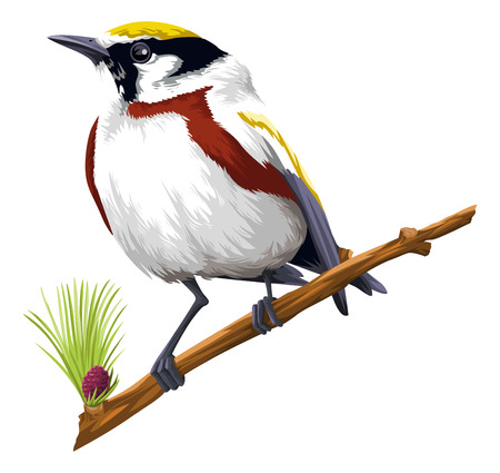 representations: Vector illustration of bird perching on tree branch against white background.