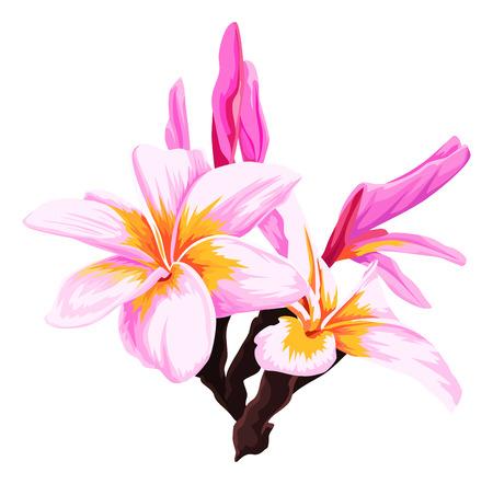 Vector illustration of fresh pink flower.