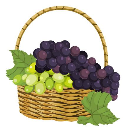 canastas con frutas: Ilustración vectorial de uva fresca madura en la cesta.