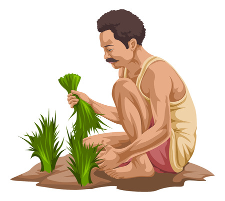 man in field: Vector illustration of farmer plucking vegetables in farm.