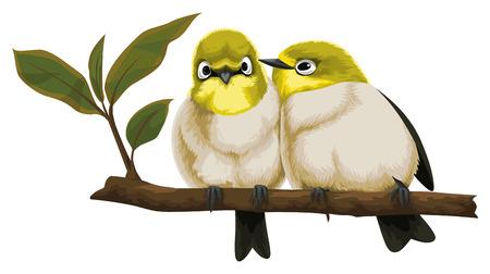perching: Vector illustration of lovebirds perching on tree branch.
