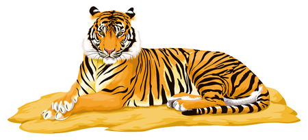 yellow tigers: Illustration of tiger.