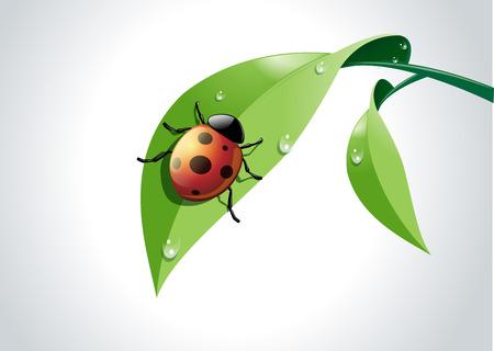 representations: Illustration of ladybug on fresh green leaf.