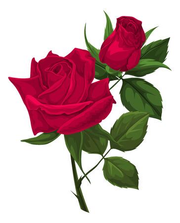 red rose: Illustration of red rose.