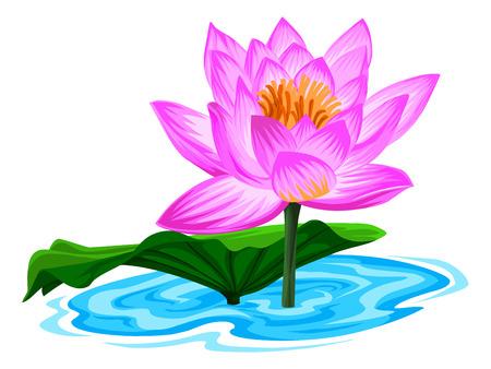corolla: Illustration of fresh lotus flower in lake. Illustration