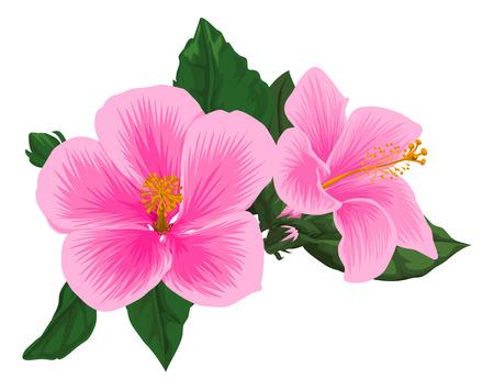 flower on head: Illustration of fresh pink flower head. Illustration