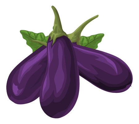 aubergine: Illustration of fresh organic brinjal. Illustration