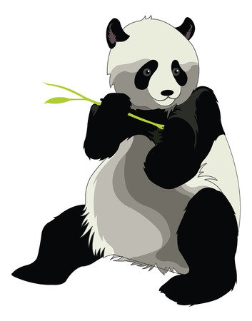 terrestrial mammal: Giant Panda or Ailuropoda melanoleuca, Eating a Bamboo Shoot, vector illustration Illustration
