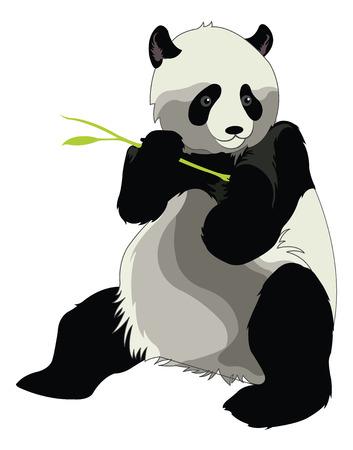�  giant panda: Panda gigante o Ailuropoda melanoleuca, Comer un brote de bamb�, ilustraci�n vectorial