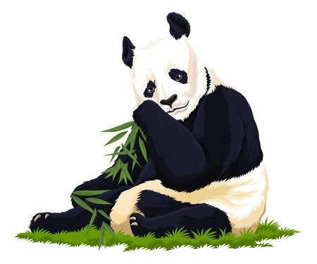 forest conservation: Vector illustration of panda.