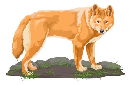 Vector illustratie van de wolf.