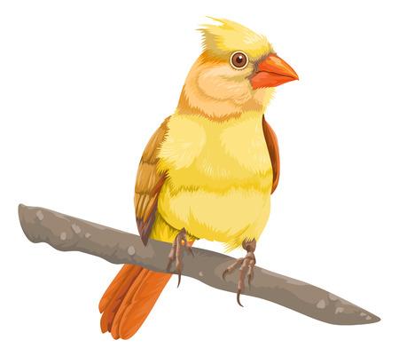 representations: Vector illustration of bird perching on tree branch.