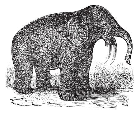 오래 Dinotherium의 그림을 새겨 져. 일러스트