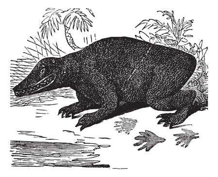 restored: Old engraved illustration of Labyrinthodon. Illustration
