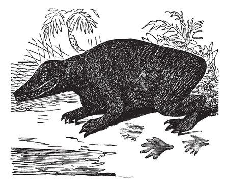 restored: Old engraved illustration of Labyrinthodon. Illustration