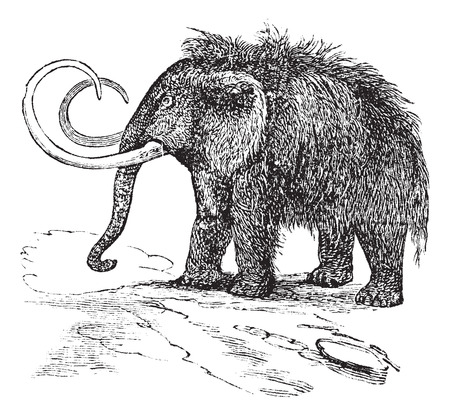 woolly: Old engraved illustration of Woolly mammoth. Illustration