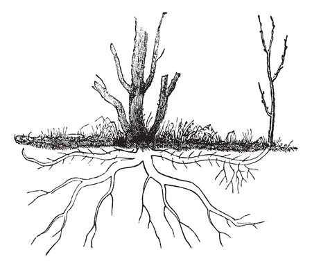 Old engraved illustration of Ground layering. Vettoriali