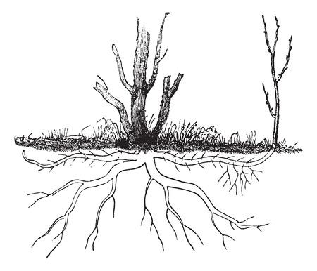 Oude gegraveerde afbeelding van de grond lagen.