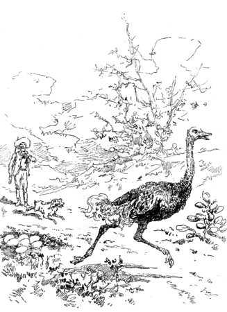 Narcissus Nicaise perilous adventures in the Congo. Pierrot barked against a large ostrich, vintage engraved illustration. Journal des Voyage, Travel Journal, (1880-81). Stok Fotoğraf